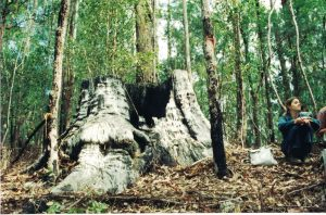 Paula Flack in Mistake State Forest (now part of Dunggir National Park) 1994