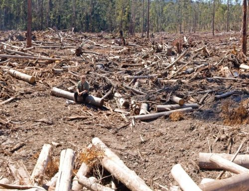 Logging commences under new weakened logging rules