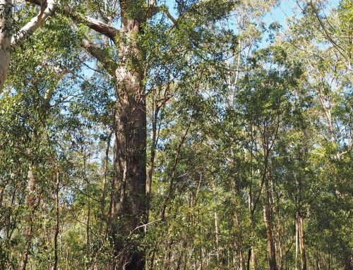Save Nambucca State Forest!